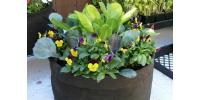 Smart pot 3 gallons avec poignées