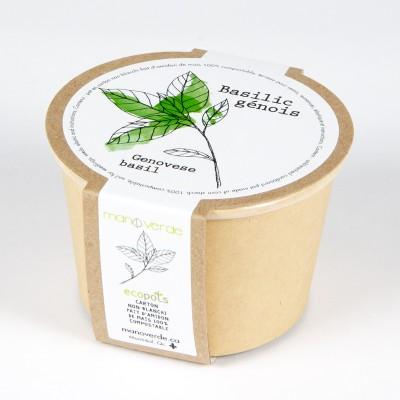 Minipot basilic