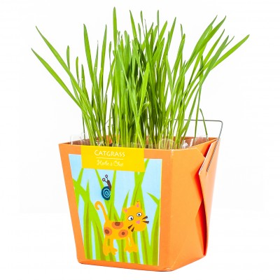 Cat grass Junior
