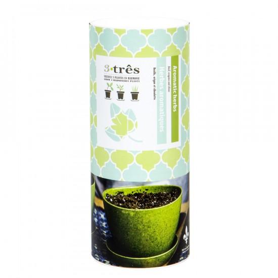 Ensemble herbes aromatiques